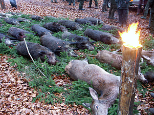 DJV legt Jagdbilanz für 2009/2010 vor