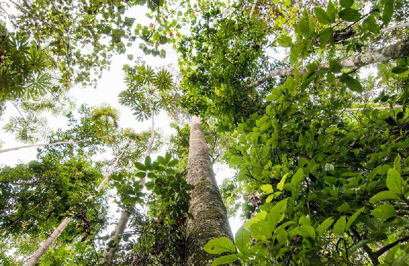 Foto: Marco Simola/Center for International Forestry Research (CIFOR)